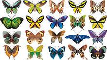 Вафельні картинки Метелики