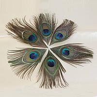 Павлинье перо, Разноцветный Глаз 18cm-10cm