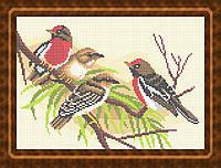 Схема для полной вышивки бисером - Птички на ветке, Арт. ЖБп4-11