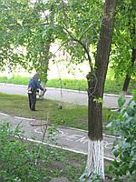 Скос травы 0939096267 - Скосить Кусты, бурьян в Киеве цена.