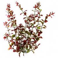 Растение Tetra DecoArt Plantastics Red Ludwigia, 38 см