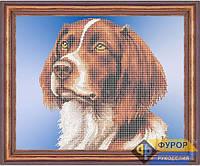 Набор для частичной вышивки бисером - Собака спаниель, Арт. ЖБч3-39