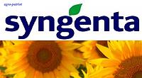 Семена подсолнечника Сингента/Syngenta