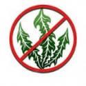Средства от сорняков, гербициды