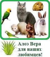 Рекомендации ветеринарного врача
