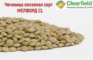 Семена чечевицы сорт Мелфорд CL устойчивая к Евролайтингу