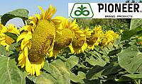Гибрид подсолнечника P62LL109 NEW 2017
