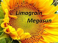 Семена подсолнуха Мегасан Лимагрейн