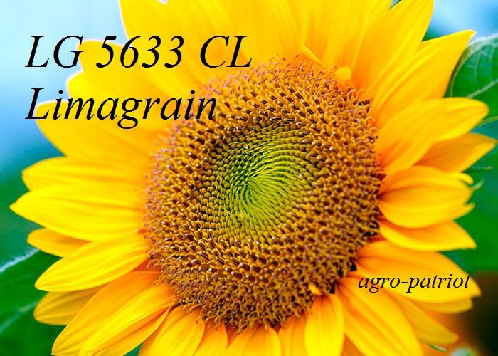 Семена подсолнуха ЛГ 5633 КЛ Лимагрейн (под Евролайтинг)