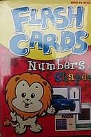 Mind to Mind, Flash cards numbers shapes.