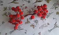 Калина цукрова - червоний колір