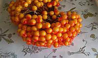 Калина глянцева (лакова) - оранжева