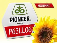 Гибрид подсолнечника P63LL06 Пионер урожай 2017 года