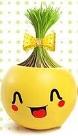 """Керамический настольный горшочек с семенами """"Smile"""""""