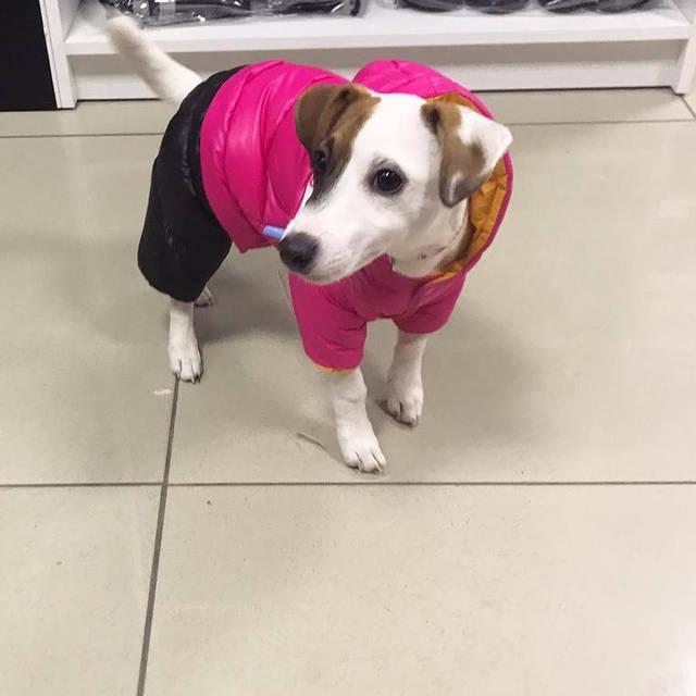 Собачка в теплом комбинезоне