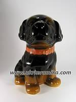 Копилка собака породы ротвейлер щенок, сувенир собака оптом