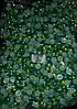 Полубусы Омбре (градиент), 8 мм, около 2000 шт/уп, желтый и зеленый, оптом