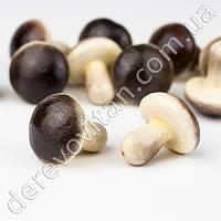 Декоративные грибы, 3.8 см, упаковка 25 шт.