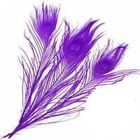 Перья Жар-птицы Павлина декоративные (Перо) Фиолетовые 25-30 см 1 шт