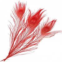 Перья Жар-птицы Павлина декоративные (Перо) Красные 25-30 см 1 шт