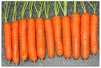 Морковь Голландская длинная