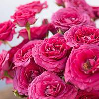 Букет из цветов (Розовое настроение)