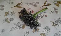 Складні тичинки  (незабудки ) - чорний колір