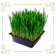 Трава газонная