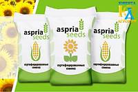 Aspria Seeds представила новые гибриды подсолнечника на сезон 2017-2018 год