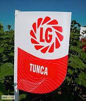 Семена подсолнечника Тунка LIMAGRAIN (Турция) 2018