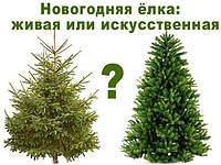 Живая сосна или исскуственная ель?