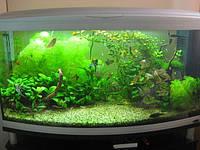 Обслуживание аквариумов Одесса