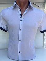 Рубашка мужская норма. Код: 5252