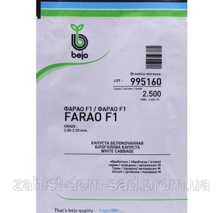 Фарао F1 (Бейо / Bejo) 2500 семян - ранняя (65 дней), белокочанная.
