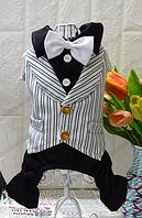 Праздничный костюм для мальчика Frant