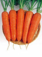 Семена моркови Ньюкасл F1 Bejo от 100 000 шт (1,6-1,8)