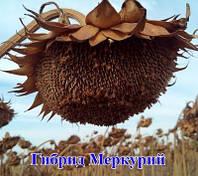 Гібрид соняшнику Меркурій, Гермес