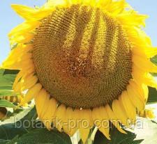 Семена подсолнечника МАС 89,М