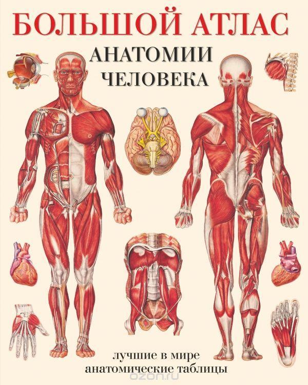 Большой атлас анатомии человека  Махиянова