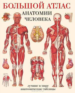 Большой атлас анатомии человека  Махиянова, фото 2