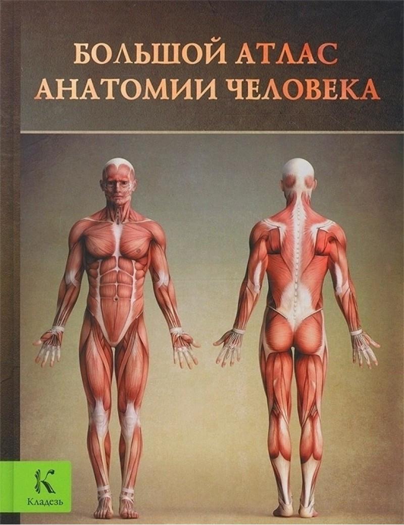 Большой атлас анатомии человека  Перез