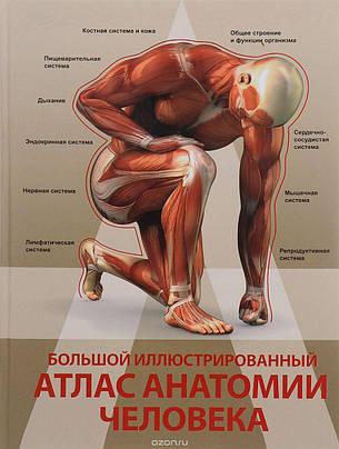 Большой иллюстрированный атлас анатомии человека, фото 2