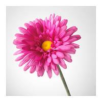 """""""СМИККА""""Цветок искусственный, ГЕРБЕРА, розовый, 50 см"""
