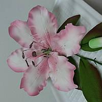 Лилия розовая тонированная с бутонами