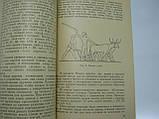 Савельева Т.Н. Как жили египтяне во времена строительства пирамид (б/у)., фото 7