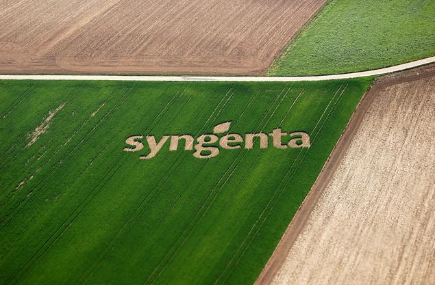 Насіння від Syngenta (Сінгента)