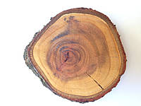 Спил яблони 31 - 35  см