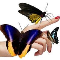 Живые тропические бабочки и куколки