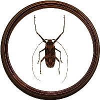 Жуки и другие насекомые в рамке