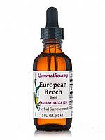 European Beech (Fagus Sylvatica 1DH), 2 fl. oz (60 ml)